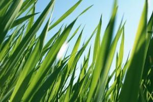 grass-604
