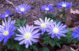 spring-flowers-001