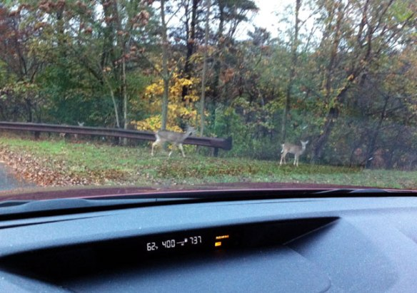 deer-out-of-car