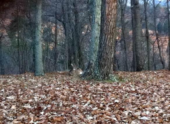 deer-resting-001