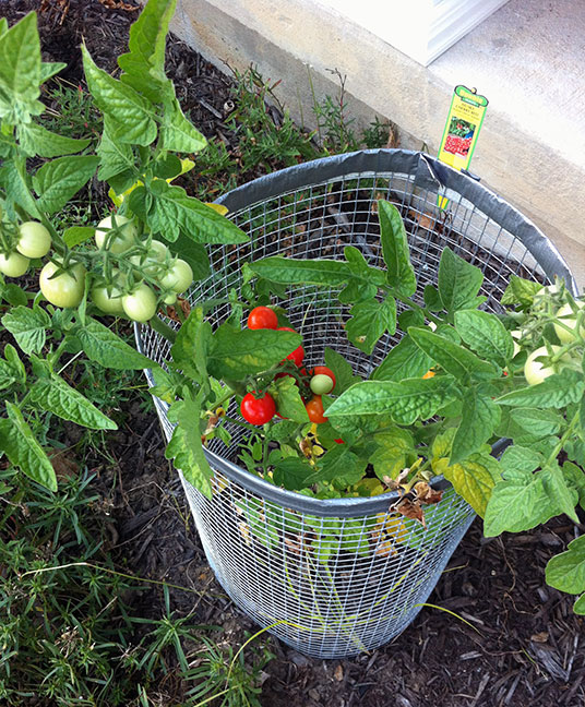 008-tomatoes