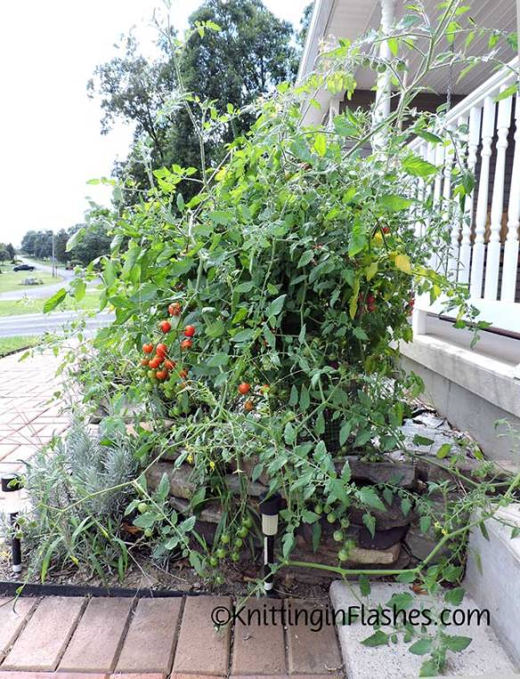 025-Tomato-plant
